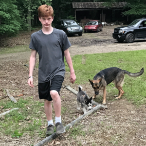 A teenage boy on the left, walking towards the camera. A small Husky puppy and a grown German Shepherd are to the right.